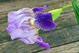 Iris flower on old wooden background