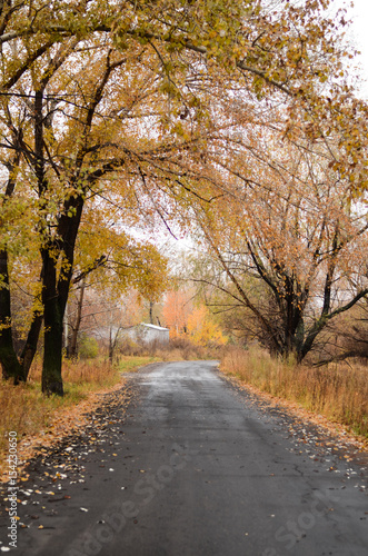 Empty road through willow forest. - 154230650