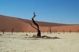 Sossusvlei Salt Pan Desert Landscape with Dead Trees and Dunes Namibia