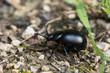 Käfer auf dem Boden