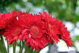 Gerbera on a blurred background