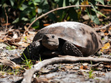 Schildkröte in Bewegung
