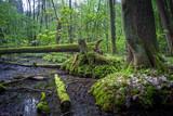 leśny rezerwat
