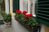 a typical austrian window with green louvered shuters and square paned windows with flowers in hanging flower pots
