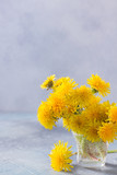 Fresh dandelions bouquet on gray background with copy space