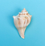 Big seashell - 154653472