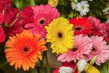 Set of red, pink, yellow and orange gerbera flowers