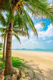 coconut trees on the sunny tropical beach