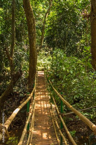 Fototapeta Jungle in tropical spice plantation, Goa, India