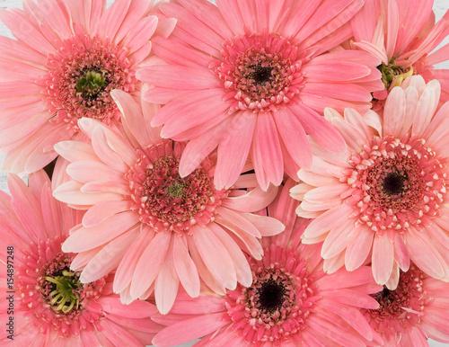 Fotobehang Gerbera Pink Gebera flowers background