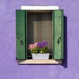window with flower on violet wall