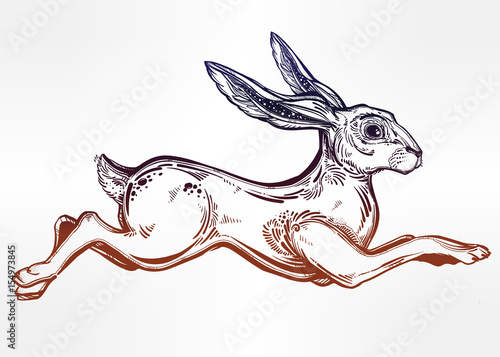 Hare running or jackrabbit jumping,