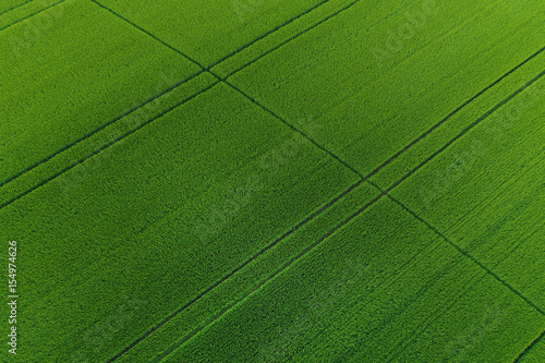 Foto op Aluminium Groene Green wheat field as background