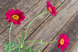 Red daisy flower on old wooden background