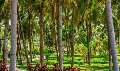 coconut palm trees near the beach