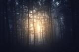 sun in dark gloomy forest morning woods scenery