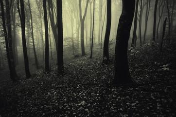 monochrome dark forest landscape