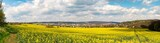 Rapeseed field on a sunny day, Rapeseed (Brassica napus), also known as rape, oilseed rape, rapa, rappi, rapaseed