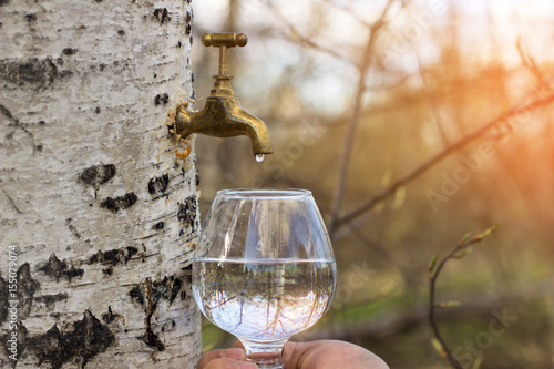 Birch juice - 155079074