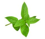 Fresh mint sprig - 155081441