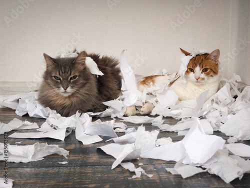 Cat and kitten played. Animals tore up important papers and made a mess on the floor - 155082629