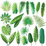 Vector tropical leaves - 155117451