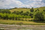 Campi coltivati a melograno tra le colline toscane