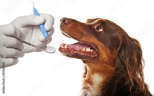 obraz PCV dental hygiene for dogs