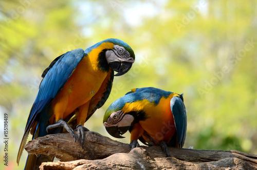Fototapeta Parrot.