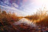 In the field rye grows