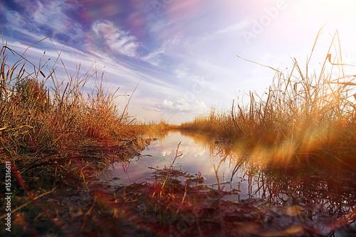 Fotobehang Purper In the field rye grows