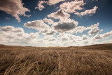 Steppe grasses and clouds in summer. Intentionally toned.