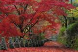 吉野 高城山遊歩道の紅葉
