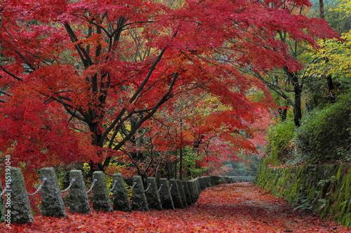 Fotobehang Bordeaux 吉野 高城山遊歩道の紅葉