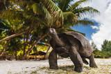 Giant turtles. Seychelles