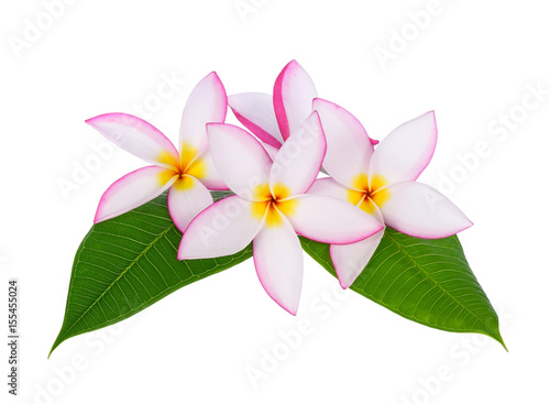Fotobehang Plumeria plumeria flower with green leaf isolated on White background