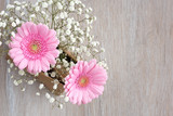 Rosa Gerbera (Blumen)