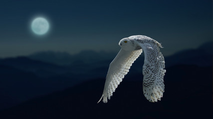 Moonlight and owl