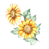 Composition with sunflower. Hand draw watercolor illustration. - 155628846