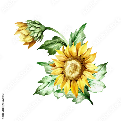 Composition with sunflower. Hand draw watercolor illustration.