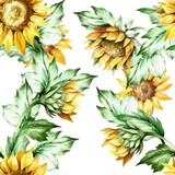 Seamless pattern with sunflower. Hand draw watercolor watercolor  - 155629002