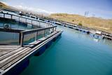 Lake Benmore Salmon Farm