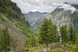 Forest zone at the descent to the Bilyuta river in the mountains Tunkinsky loaches of the Eastern Sayan mountains