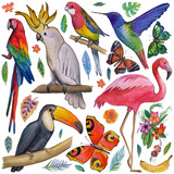 Tropical garden Birds, butterflies, parrots, flowers, fruits, palms Toucan Flamingo Сockatoo Hummingbird Hand drawn watercolor images, icons Tropical summer vacation - 155767272
