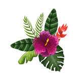 beauty and exotic flowers, roses and plants