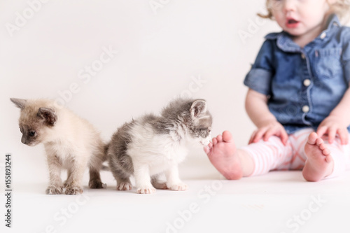 Poster Cute toddle girl plays with baby kittens