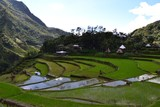 Rice terraces Banaue