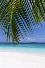 Tropical pristine beach with coconut palms