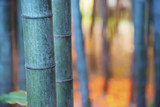 Big bamboo shoots close-up in the forest