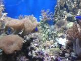 Corals, shells